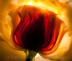 fleuri 002