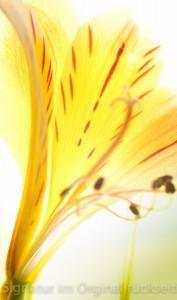 fleuri 008