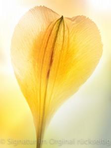 fleuri 004