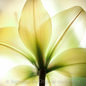 fleuri 005