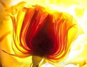 fleuri 001